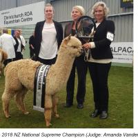 Shamarra Diesel Alpaca Show Amanda VandenBosch