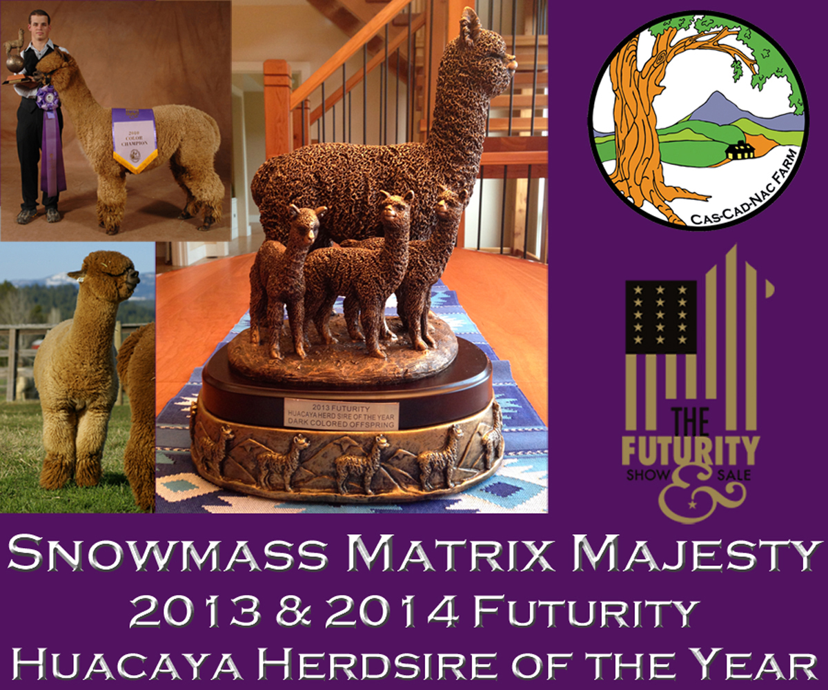 Snowmass Matrix Majesty - Matrix Majesty is the genetic amalgam of some of the greatest names to ever grace the North American alpaca herd.