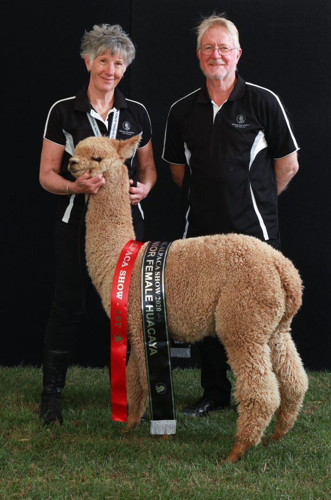 alpacasRstyle Rideau NZ 2020